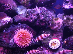 coral(0.0), coral reef(1.0), animal(1.0), coral reef fish(1.0), organism(1.0), marine biology(1.0), invertebrate(1.0), marine invertebrates(1.0), aquarium lighting(1.0), reef(1.0), sea anemone(1.0),