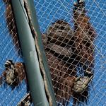 Los Angeles Zoo 079