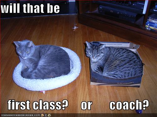 funny-pictures-cat-airplane-first-class-coach