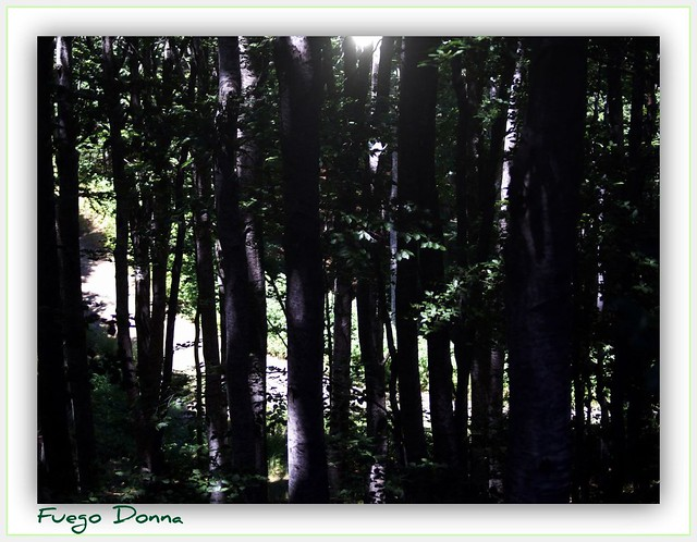 forest's light