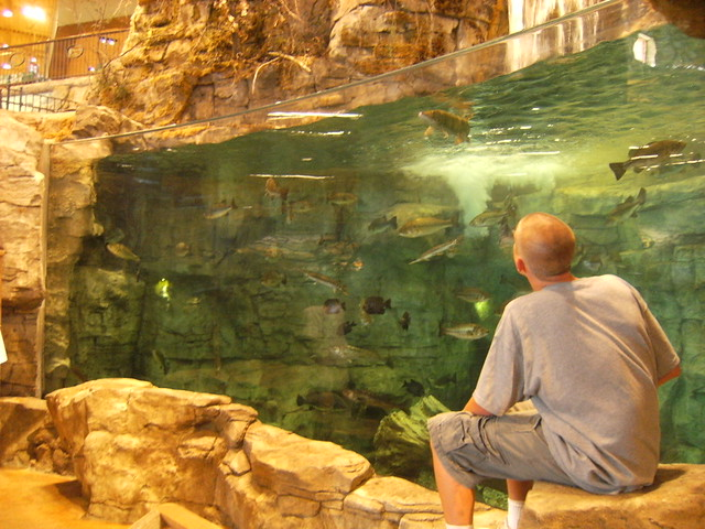 Rossford oh 39 s bass pro shop 39 s fish tank explore for Bass pro shop fishing