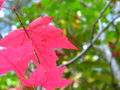 Chattanooga Fall Foliage