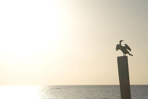 ocean bird water sunrise keys blog florida