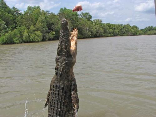 schreibsachen mit krokodilen