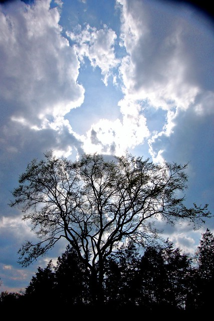 Clouds, Sky, Sun and a Tree
