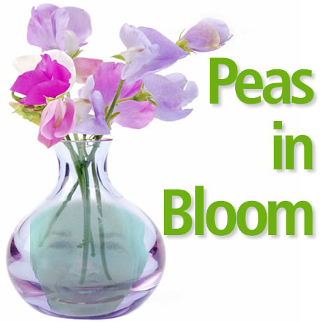 Peas in Bloom