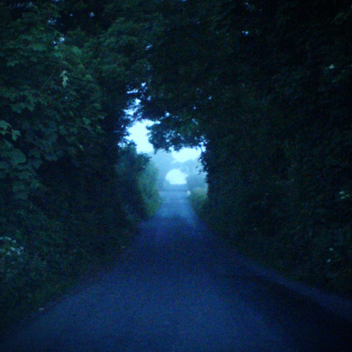 road morning trees mist branches tunnel