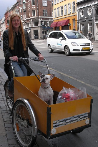 French Bulldog in Copenhagen