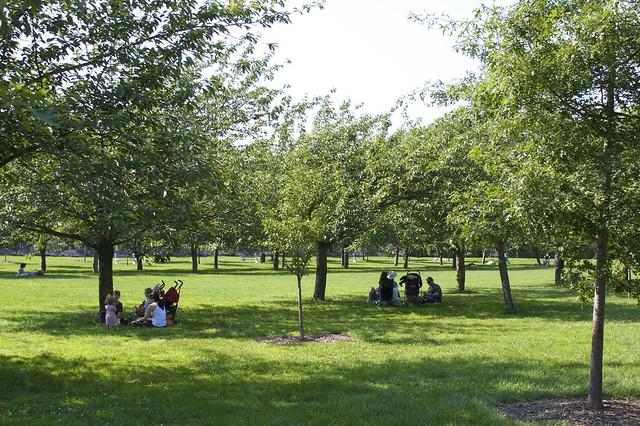 Brooklyn Botanic Garden Sakura Field