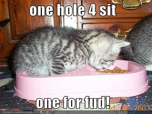 funny-pictures-kitten-foodbowl-eat