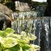 Japanese garden #1 / Waterfall