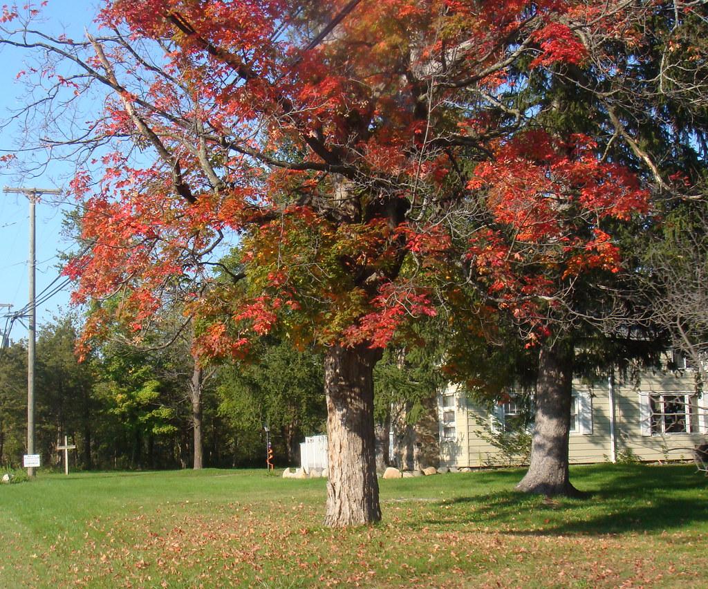 Stoney Creek Park Nature Center