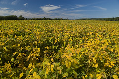 canola(0.0), sunflower(0.0), flower(0.0), mustard plant(0.0), produce(0.0), food(0.0), rapeseed(0.0), prairie(1.0), agriculture(1.0), field(1.0), yellow(1.0), plain(1.0), plant(1.0), crop(1.0), meadow(1.0), rural area(1.0), grassland(1.0),