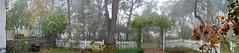 Frontyard Fog