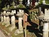 stone lanterns in Kasuga Taisha
