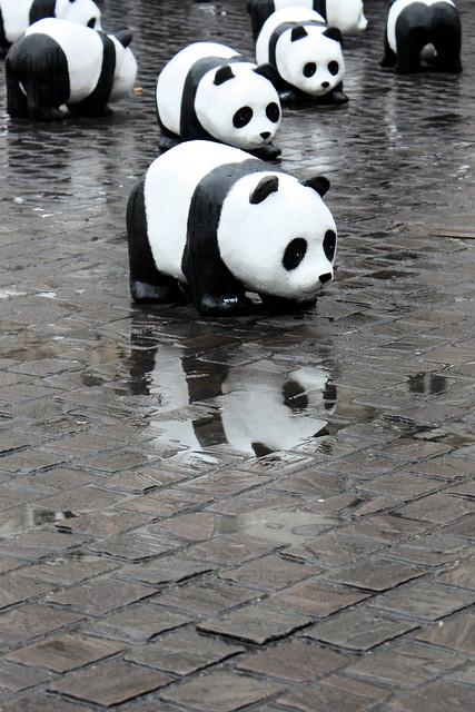 panda reflection 1600 pandas by wwf nantes 4 flickr photo sharing. Black Bedroom Furniture Sets. Home Design Ideas