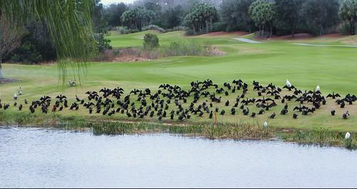 golf landscape florida springtime southwestflorida bonitaspringsfl photostopost springruncc