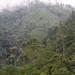 forest at La Cumbre, Oaxaca, Mexico, 2004_12_17_035.jpg por maholyoak