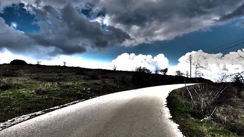 road trees sururban