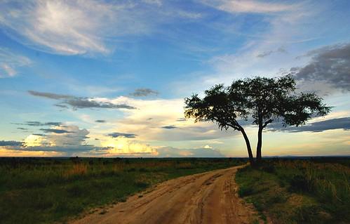 pictures life africa park wild wildlife images falls national uganda murchison desai murchisonfallsnationalpark eastafrica murchisonfalls ugandawildlife ashit ugandasafari ugandanationalparks murchisonfallsuganda aashit