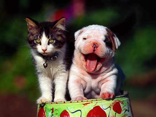 smiling puppy kitten outside cute