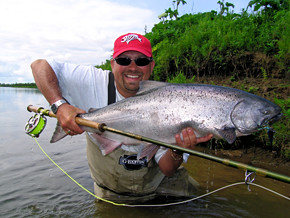 Fly caught Alaskan King Salmon.jpg