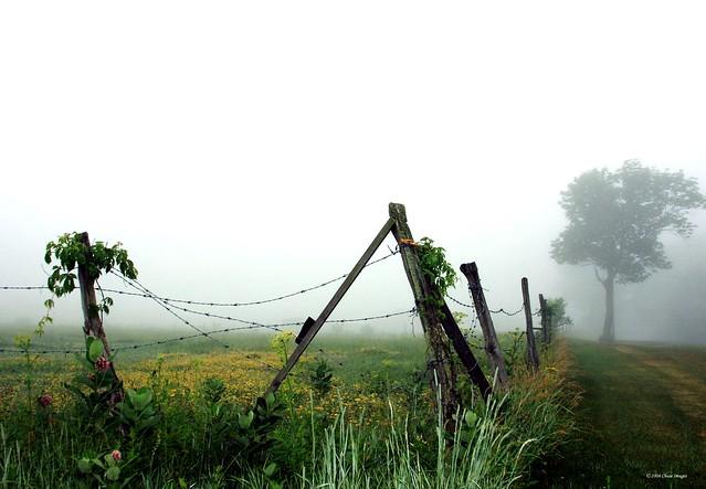 Got Fog ?