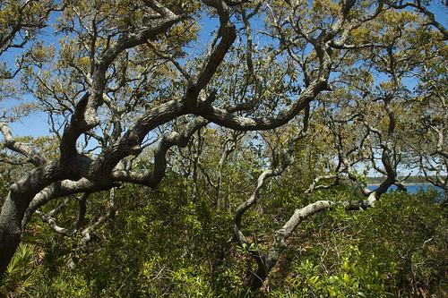 oak florida walton graytonbeach highway30a
