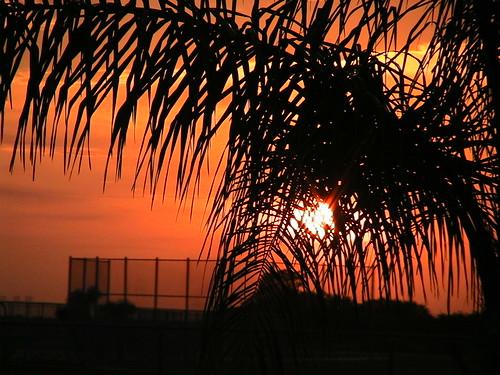 sunset orange black tree florida palm fl loxahatchee