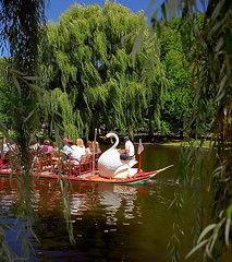 Boston Public Gardens - Swan Boats
