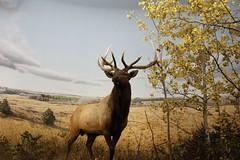rubber deer