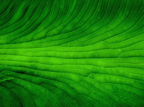 verde green groen vert grün zielony stevecavrich stephenscavrich grønn gräsplan zöld estebancavrico stephencavrich