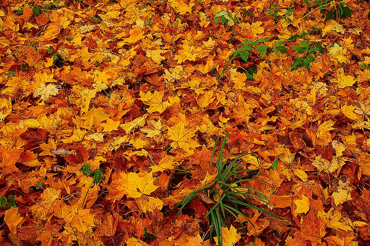 autumn leaves falling down fallen down leaves autumn