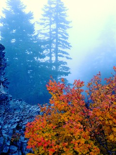 Foggy Larch Mountain