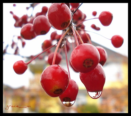 ..berry drops..