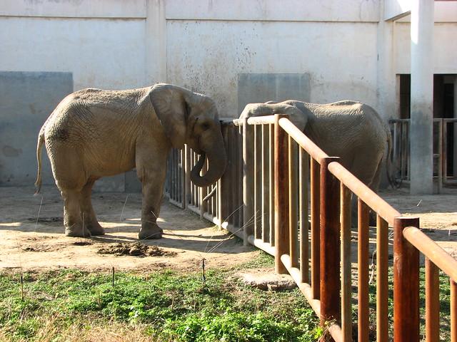 北京动物园 非洲象.jpg