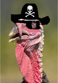 Image of Planksy, the pirate turkey