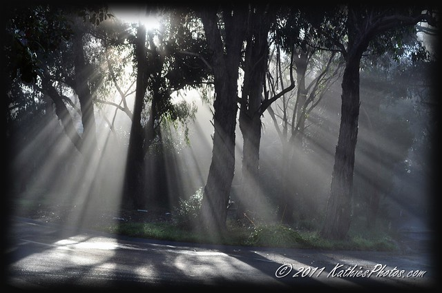151-365 Sunrise and fog at home