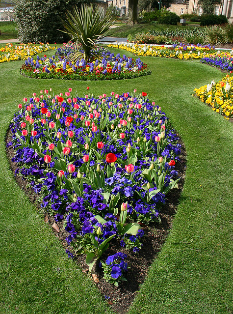 Heart shaped flower bed flickr photo sharing for Flower bed shapes designs