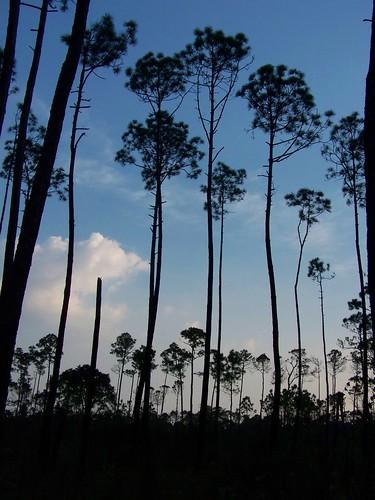 county trees sunset st mississippi martin crane wildlife jackson national sandhill refuge