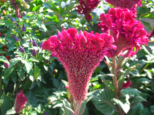 A strange but beautiful flower