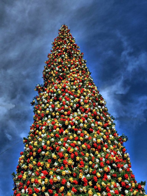 Fashion Island S Christmas Tree Explore 115 Newport