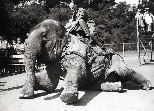 Riding Elephant, 1933