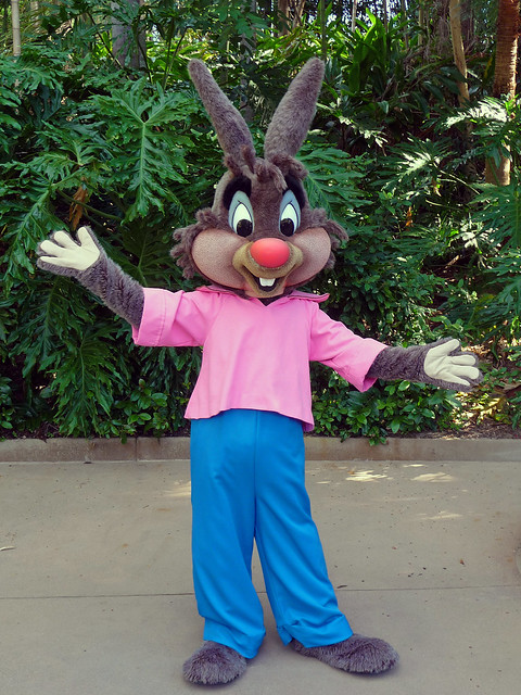 Meeting the elusive Br'er Rabbit!