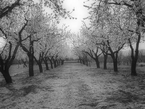 Primavera en la Huerta 02