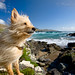 Pet Photography Ireland / Kerry :: Happy Dogs in St. Finians Bay :: dog, doggy, pets, photographer, county kerry, ireland,