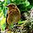 the Birds UK group icon