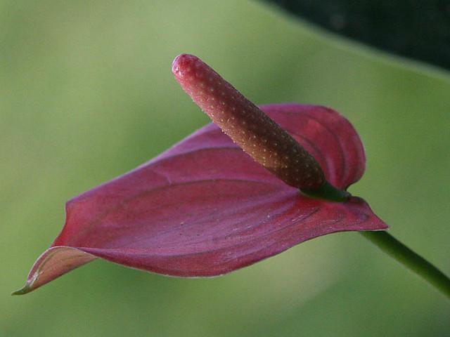 Flower - Macro 6298