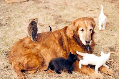 dog pet slr film goldenretriever cat 35mm golden kitten pentax kitty retriever scan spotmatic 5bestdogs sp1000 honeywellpentax justpentax