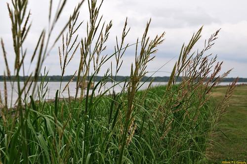 canada nature geotagged newbrunswick shediac vob naturephotographs allrightsreserved©drgnmastrpjg rawjpg geo:lat=46272461 geo:lon=64563732 ©pjgergelyallrightsreserved
